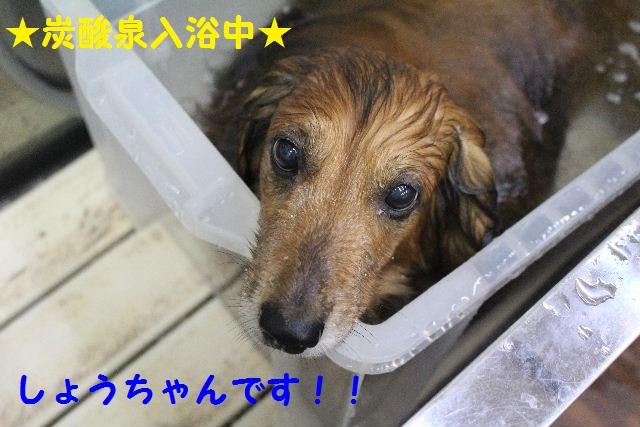 ハロウィ~ン♪_b0130018_20574380.jpg