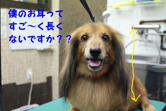 ハロウィ~ン♪_b0130018_20581895.jpg