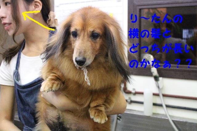 ハロウィ~ン♪_b0130018_20582986.jpg