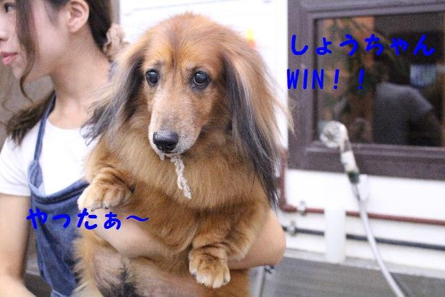 ハロウィ~ン♪_b0130018_20584470.jpg