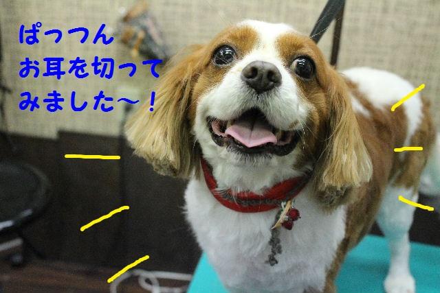 ハロウィ~ン♪_b0130018_2110209.jpg