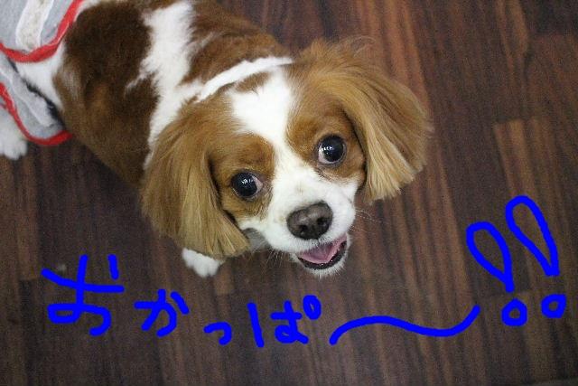 ハロウィ~ン♪_b0130018_21104461.jpg
