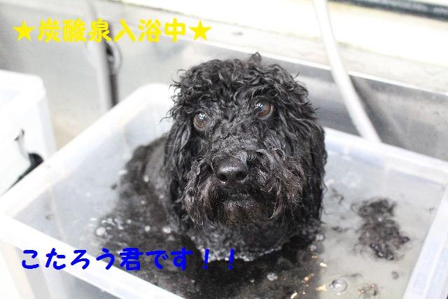 ハロウィ~ン♪_b0130018_2115526.jpg