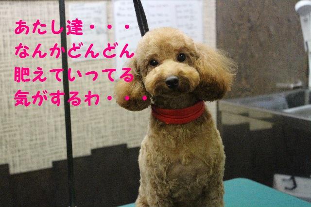 ハロウィ~ン♪_b0130018_21175623.jpg