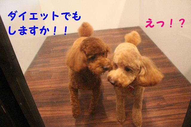 ハロウィ~ン♪_b0130018_21184719.jpg
