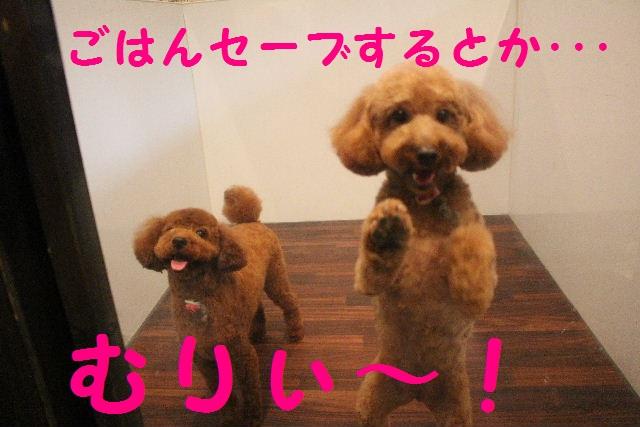 ハロウィ~ン♪_b0130018_2119106.jpg