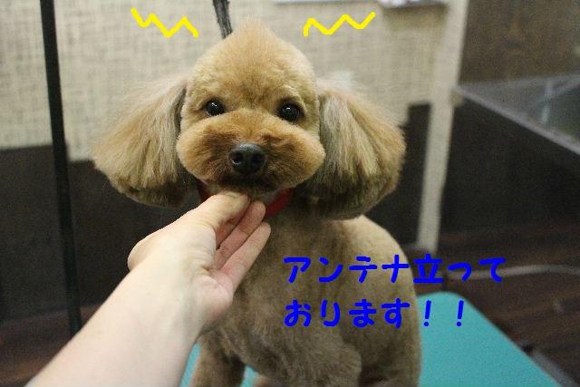 ハロウィ~ン♪_b0130018_2125966.jpg