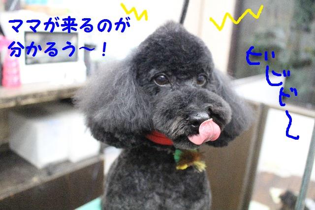 ハロウィ~ン♪_b0130018_2131512.jpg