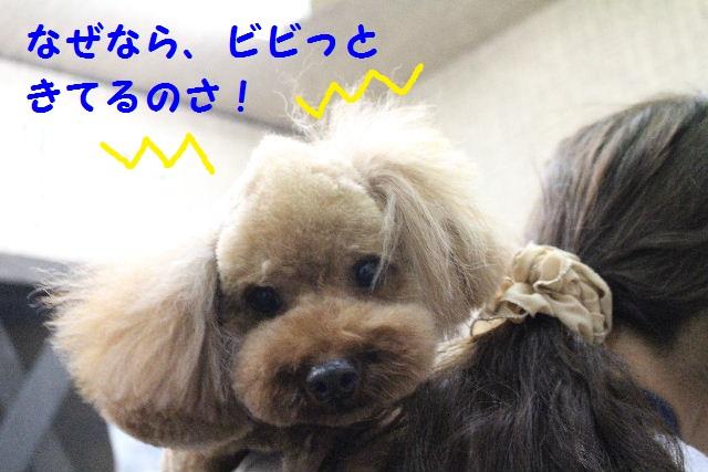 ハロウィ~ン♪_b0130018_2133747.jpg