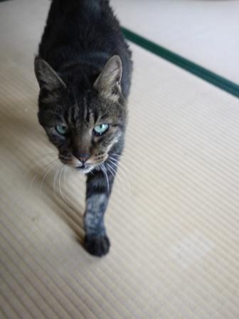 猫のお留守番 サンくんツキくん編。_a0143140_22533220.jpg