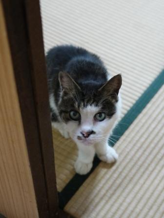 猫のお留守番 サンくんツキくん編。_a0143140_22564699.jpg