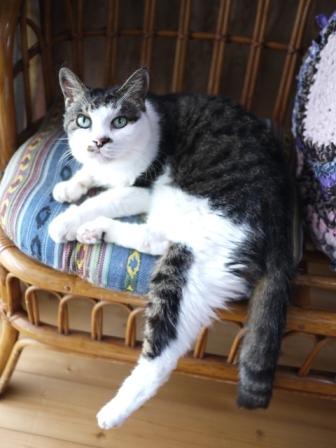 猫のお留守番 サンくんツキくん編。_a0143140_22575668.jpg