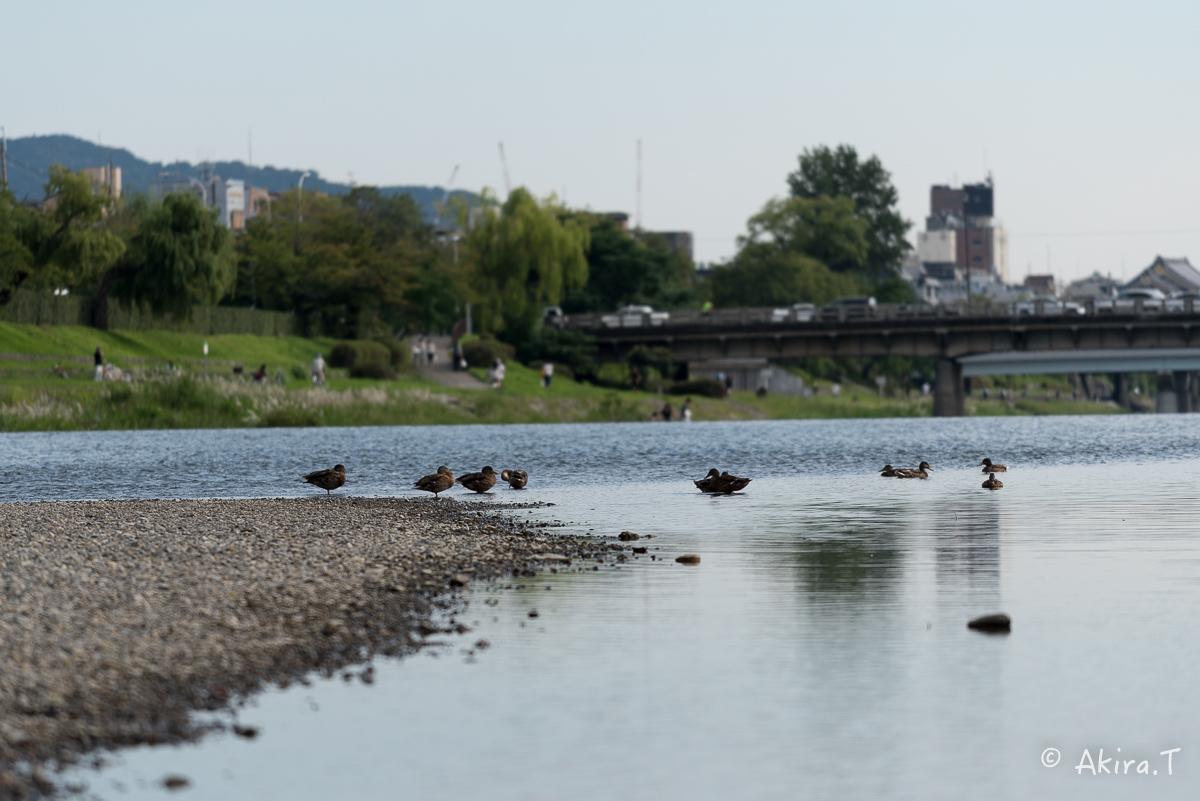 みんなの鴨川 -1-_f0152550_22441349.jpg