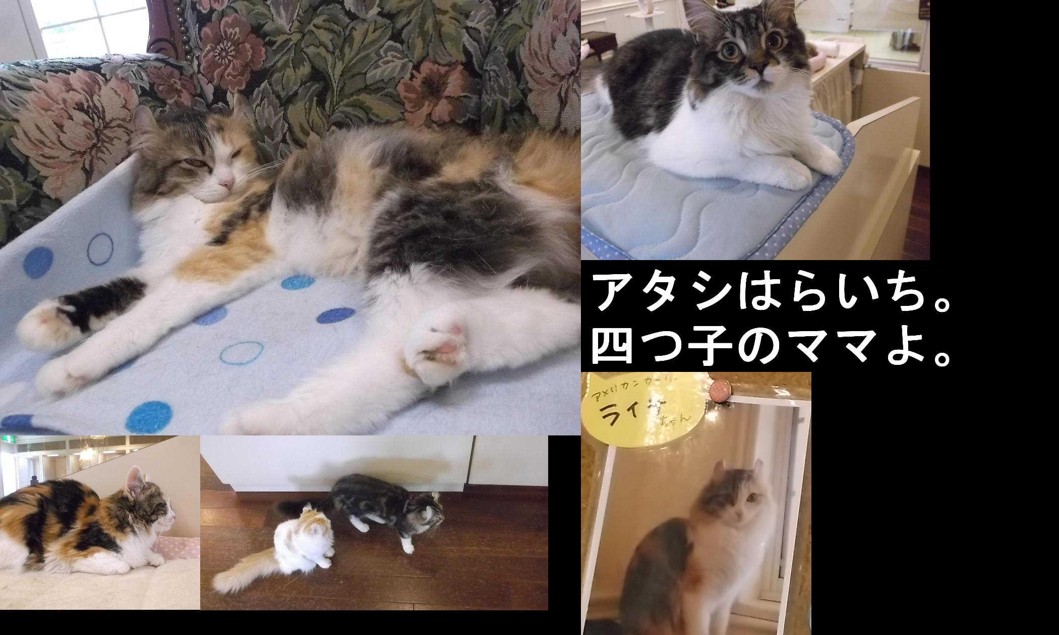 谷崎潤一郎伝_e0265768_15552714.jpg