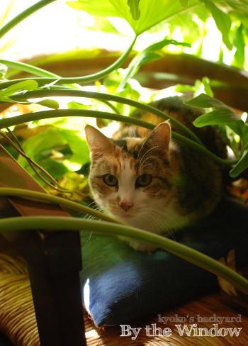 窓辺の猫 / スーパームーン_b0253205_02201993.jpg