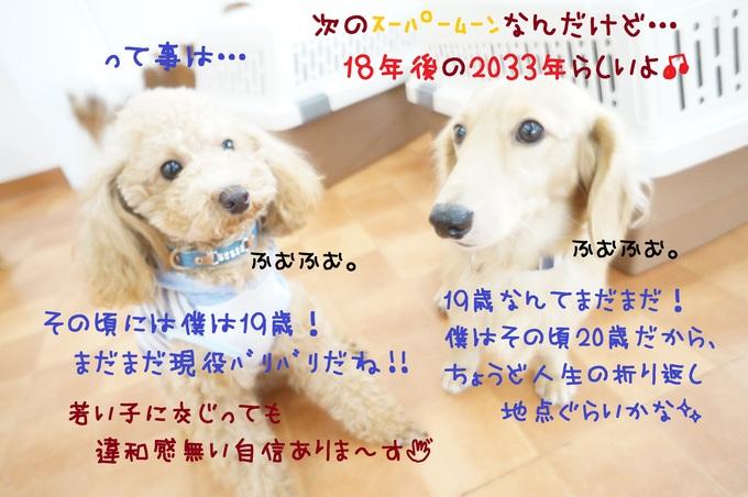 d0220513_1751327.jpg