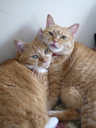 猫のお留守番 マリエちゃんメイちゃん編。_a0143140_2048540.jpg