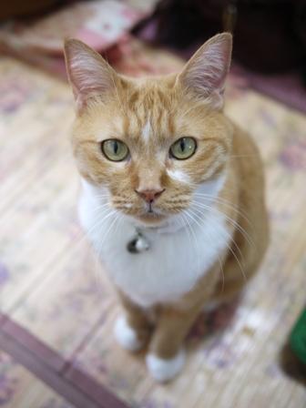 猫のお留守番 マリエちゃんメイちゃん編。_a0143140_20503326.jpg