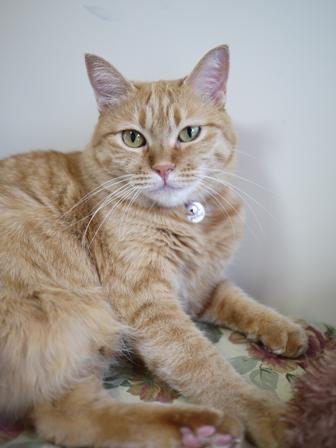 猫のお留守番 マリエちゃんメイちゃん編。_a0143140_2050937.jpg