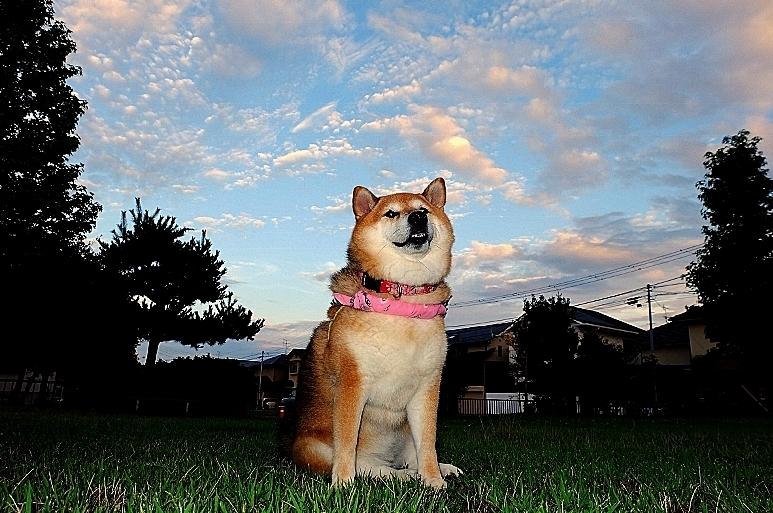 雲をつかむ_b0314043_07300088.jpg