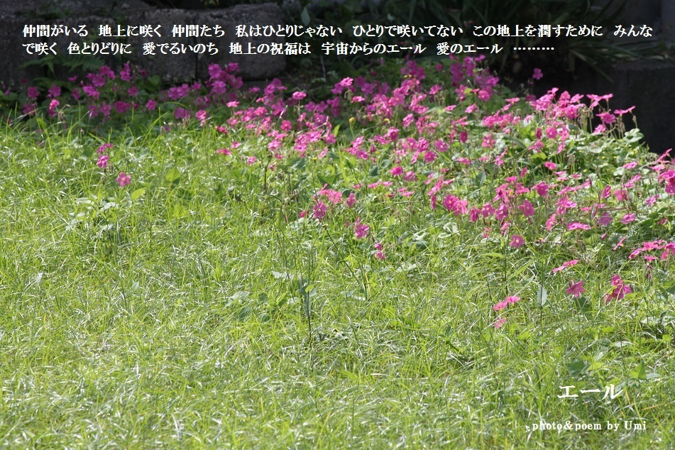 f0351844_11475867.jpg