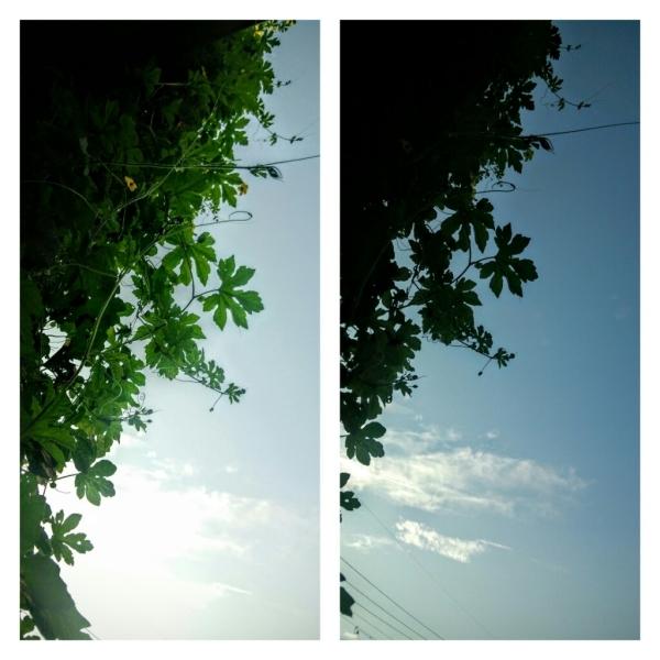 秋から楽しむゴーヤ_e0348754_08173416.jpg
