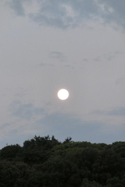 藤田八束の自然の美しさ@夕方から朝方に光輝く「スーパームーン」に希望を託す_d0181492_23223469.jpg