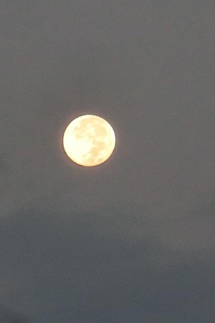 藤田八束の自然の美しさ@夕方から朝方に光輝く「スーパームーン」に希望を託す_d0181492_23225886.jpg