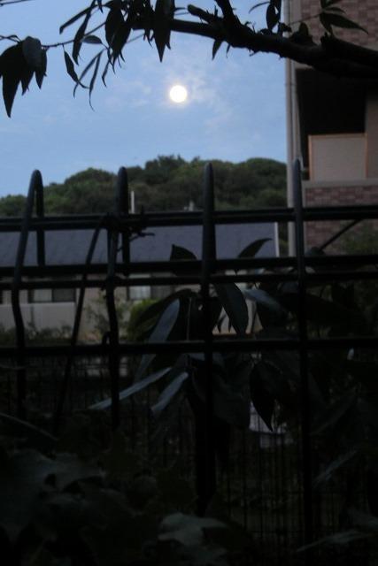 藤田八束の自然の美しさ@夕方から朝方に光輝く「スーパームーン」に希望を託す_d0181492_23235345.jpg