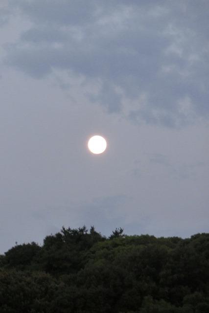 藤田八束の自然の美しさ@夕方から朝方に光輝く「スーパームーン」に希望を託す_d0181492_23243685.jpg