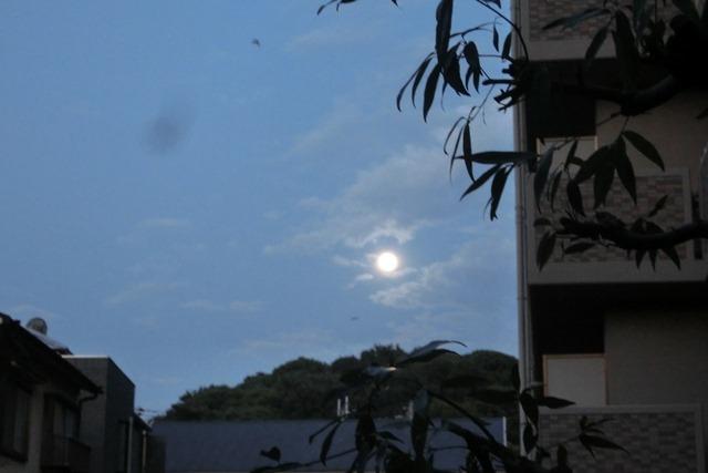 藤田八束の自然の美しさ@夕方から朝方に光輝く「スーパームーン」に希望を託す_d0181492_23262344.jpg