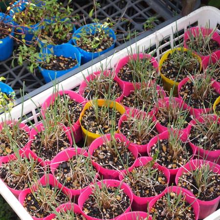 お店の苗ものは少しずつ冬支度_a0292194_14185755.jpg