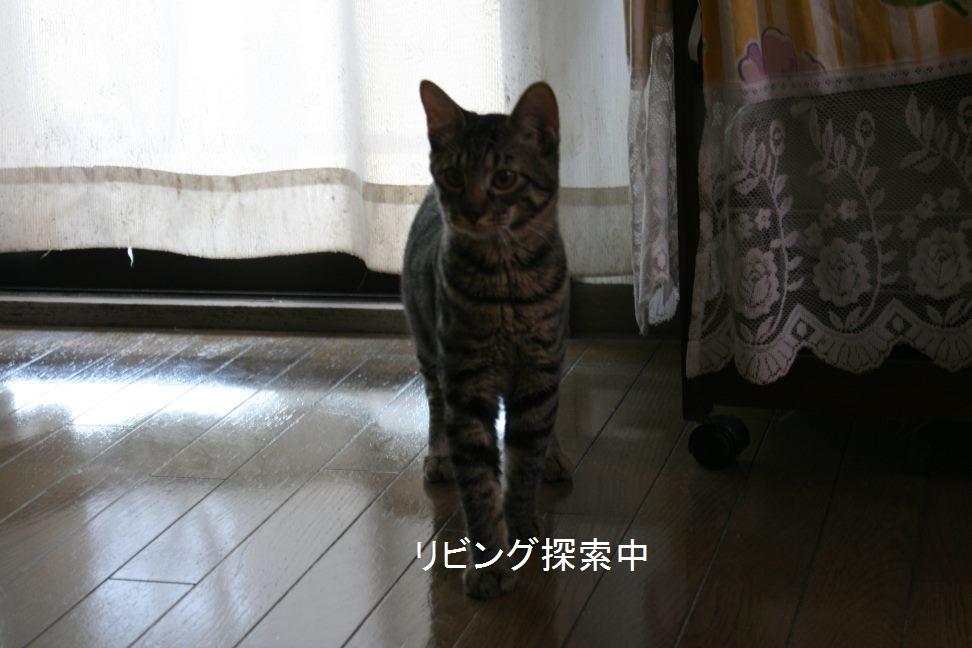 甘平くん 新生活スタート!_f0242002_15494860.jpg