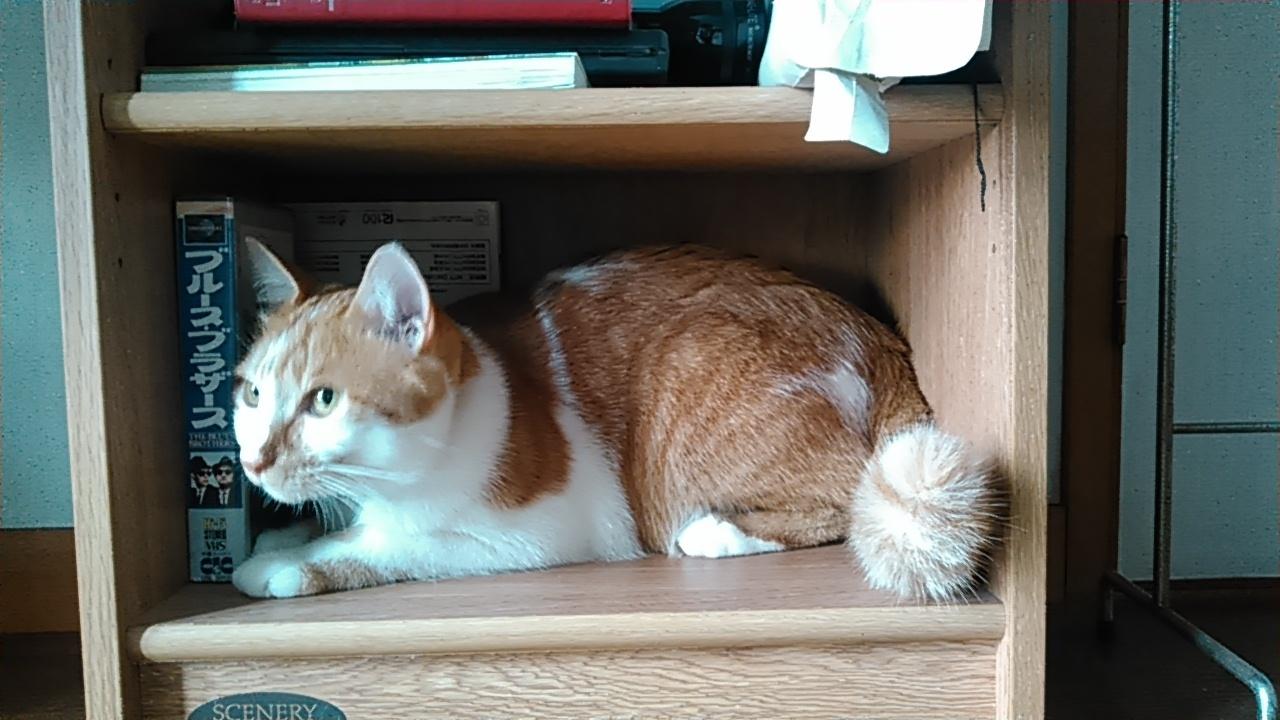 【猫】隠れてる?_f0141609_11222360.jpg