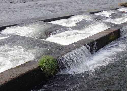 筑後川水系で釣り納め_a0315918_16534340.jpg