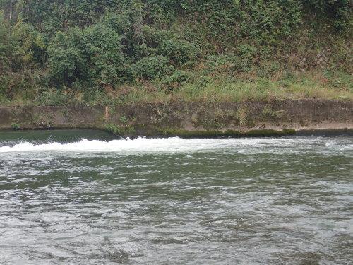 筑後川水系で釣り納め_a0315918_16550202.jpg
