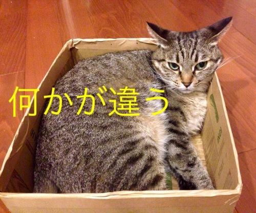 猫小劇場③_c0366722_14563676.jpeg
