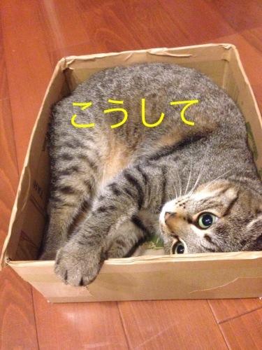 猫小劇場③_c0366722_14565905.jpeg