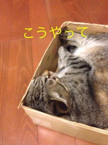 猫小劇場③_c0366722_14571813.jpeg