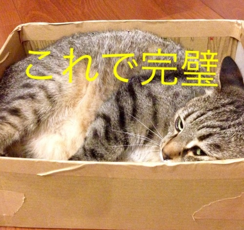 猫小劇場③_c0366722_14573511.jpeg