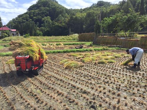 稲刈り_f0032130_17260522.jpg