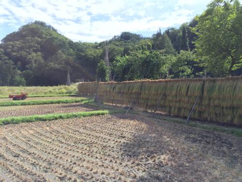 稲刈り_f0032130_17260643.jpg