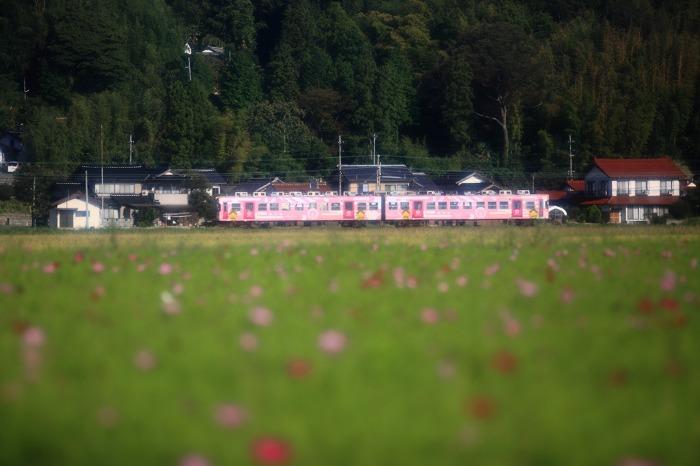 一畑電車 コスモスと_a0294534_19253188.jpg
