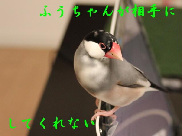 c0365734_20234486.jpg