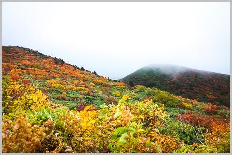 栗駒登山ときのこ_c0176838_15393297.jpg