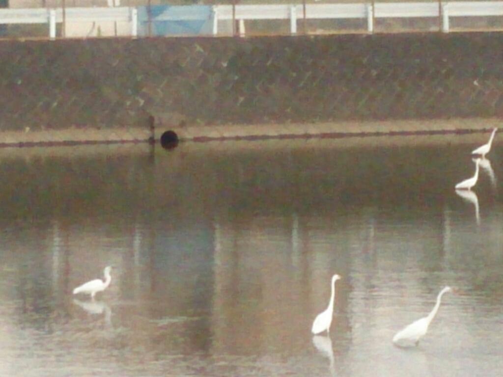 白鷺の木_f0323446_18264635.jpg