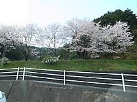 吉野の桜「吉野サロン」休憩所に開放です_d0342155_13453058.jpg