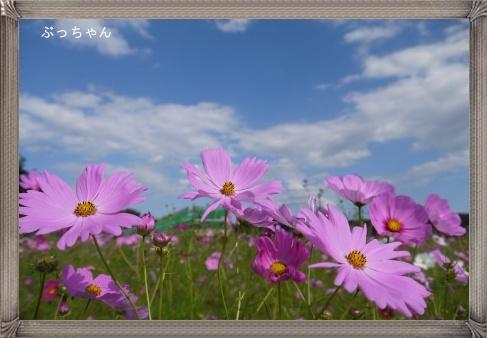 f0353990_11085869.jpg