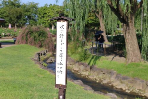 咲いてます!川西ダリヤ園・・・63_c0075701_7201366.jpg