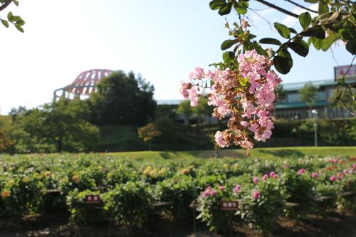 咲いてます!川西ダリヤ園・・・63_c0075701_7201931.jpg